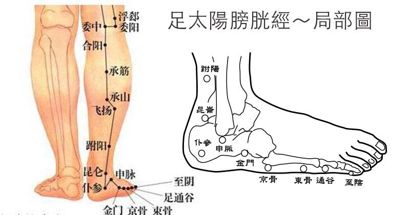 足太陽膀胱經局部圖